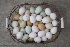 Eggs of many colors by woodleywonderworks is licensed under CC BY 2.0